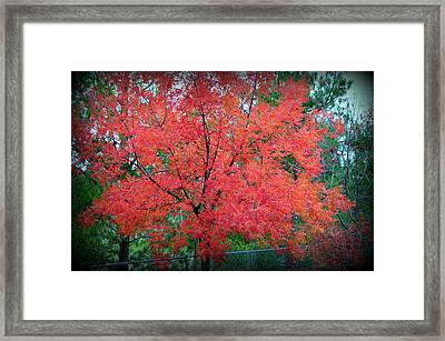Framed Print featuring the photograph Tree On Fire by AJ Schibig