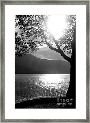 Tree On Lake Framed Print