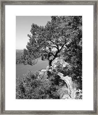 Tree On Mount Bonnell Framed Print by Lindsey Orlando