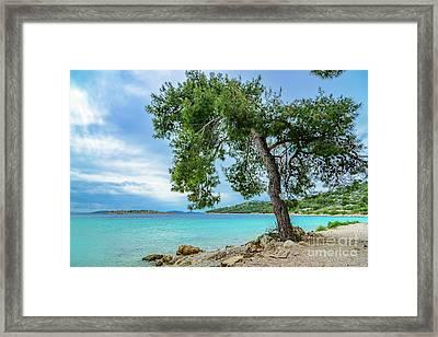 Tree On Northern Dalmatian Coast Beach, Croatia Framed Print