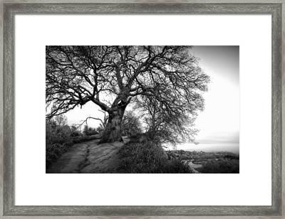 Tree On Ridge - Black And White Framed Print