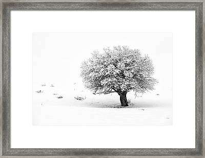 Tree On Snowy Slope Framed Print