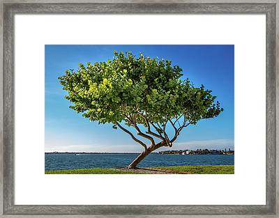 Tree On The Bay Framed Print
