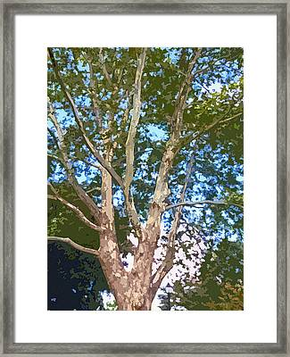 Tree On The Common Framed Print