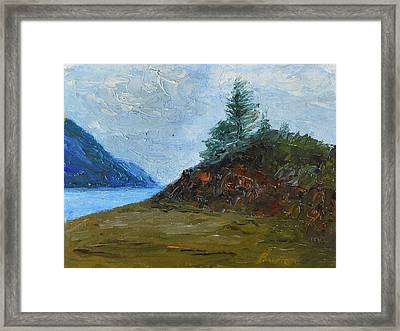 Tree On Turnagain Framed Print