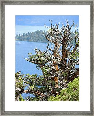 Tree Over Emerald Cove Framed Print