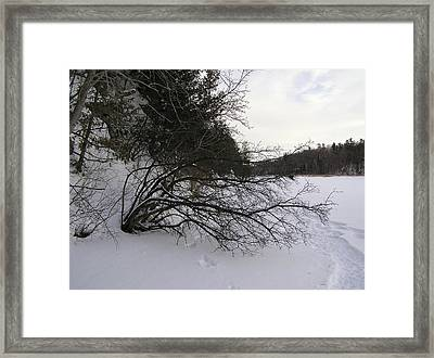 Tree Over Frozen Lake Framed Print by Richard Mitchell