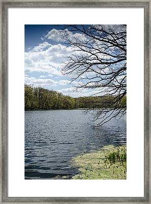 Tree Over Water Framed Print