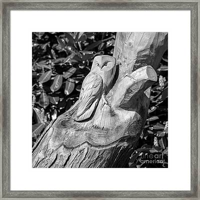 Tree Owl  Framed Print