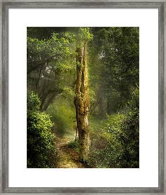 Tree Passing Framed Print by Larry Jones