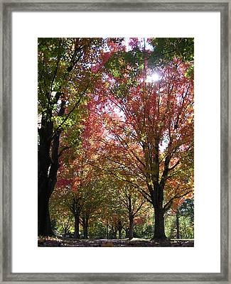 Tree Pathway Framed Print by Audrey Venute