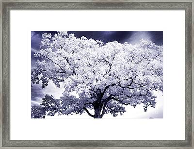 Framed Print featuring the photograph Tree by Paul W Faust - Impressions of Light