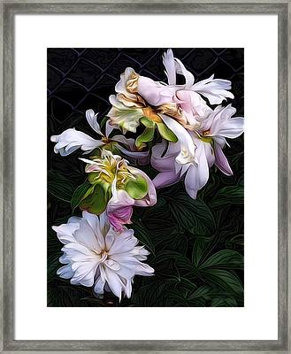 Framed Print featuring the digital art Tree Peony by Alexis Rotella