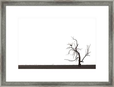 Tree Framed Print by Peter Tellone