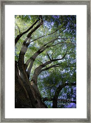 Tree Rays Framed Print