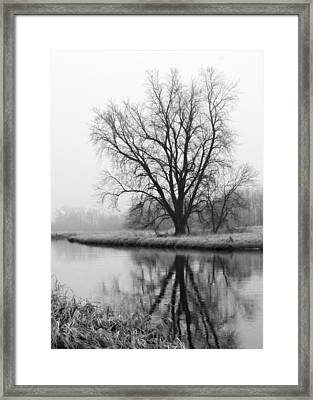 Tree Reflection In The Fox River On A Foggy Day Framed Print