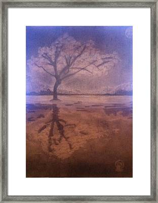 Tree Reflection  Framed Print