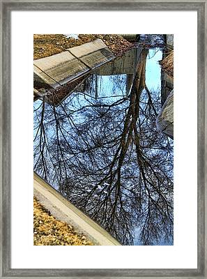 Tree Reflection From No Where Photography Image Framed Print by James BO  Insogna