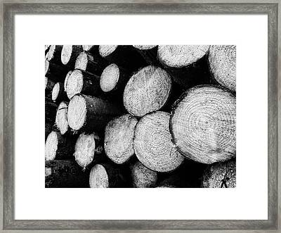 Tree Rings Framed Print