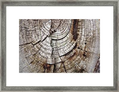 Tree Rings - Photography Framed Print by Ann Powell