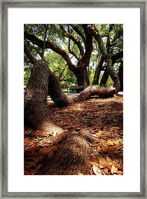 Tree Root Framed Print by Greg Mimbs