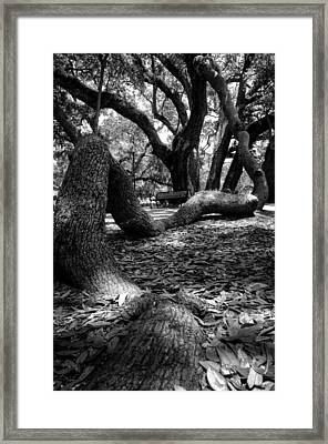 Tree Root In Black And White Framed Print by Greg Mimbs