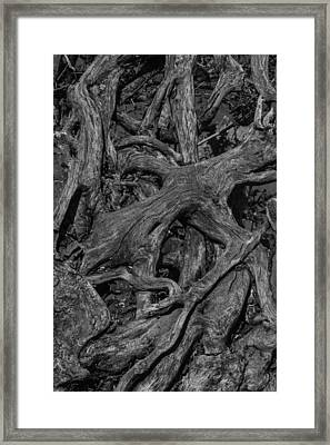 Tree Roots Black And White Framed Print
