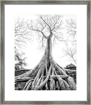 Tree Roots Cambodia Angkor Wat Framed Print by Cory Dewald