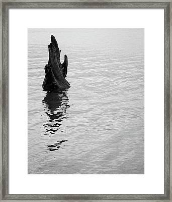 Tree Reflections, Rest In The Water Framed Print