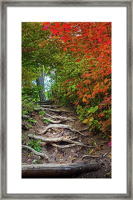 Tree Roots On A Trail Framed Print