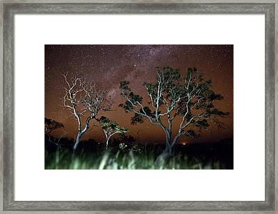 Tree Savanna Stars Sky Serrania De Chiquitos Bolivia Framed Print by Dirk Ercken