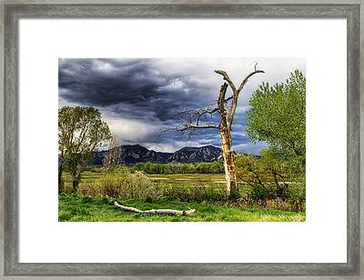Tree Sculpture Framed Print