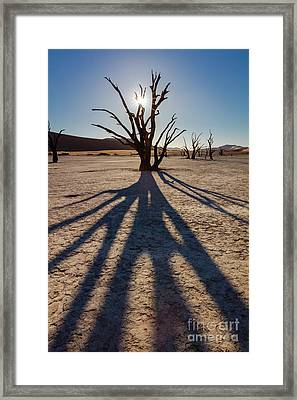 Tree Shadow Framed Print