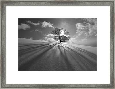 Tree Shadow Framed Print by Kengo Shibutani