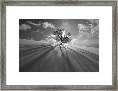Tree Shadow Framed Print by Kengo Shibutani
