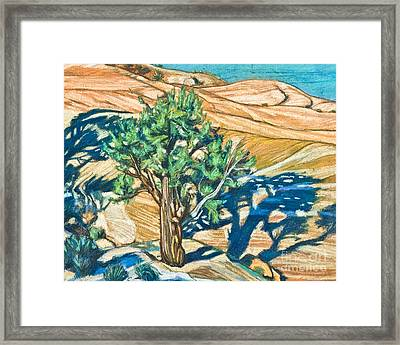 Tree Shadow On Slickrock - Lwtss Framed Print by Lewis Williams OFS
