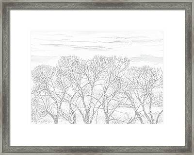 Framed Print featuring the photograph Tree Silhouette Gray by Jennie Marie Schell