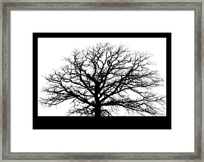 Tree Silhouette Framed Print by Inspired Arts