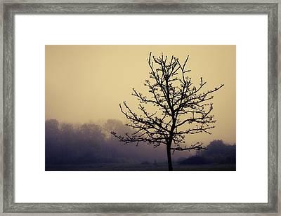 Tree Silhouette On A Foggy Morn Framed Print