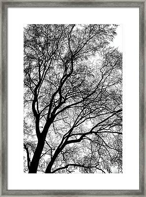 Tree Silhouette Series 1 Framed Print