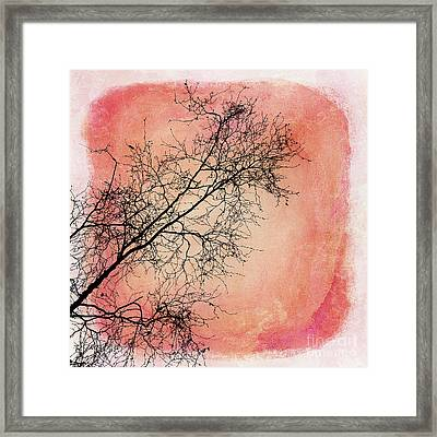 tree silhouettes II Framed Print by Priska Wettstein