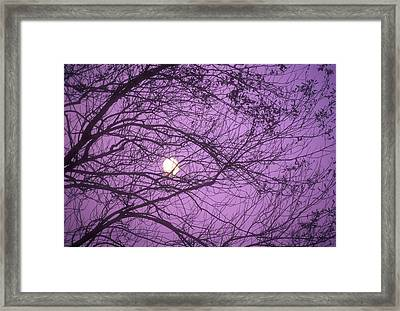 Tree Silhouettes With Rising Moon In Cades Cove, Great Smoky Mountains National Park, Tennessee, Usa Framed Print