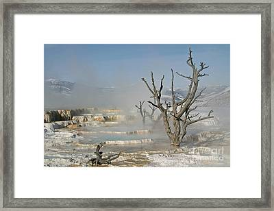 Tree Skeletons In The Mist Framed Print
