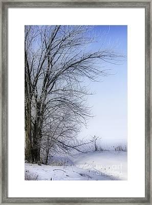 Tree-snow-fog Framed Print by Deborah Benoit