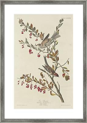 Tree Sparrow Framed Print