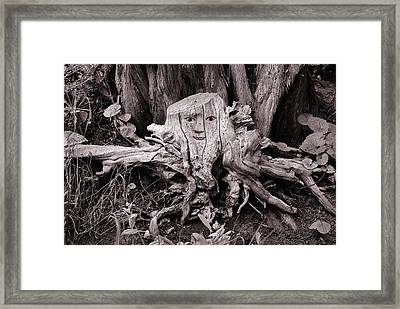 Tree Spider Framed Print