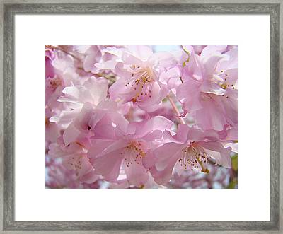 Tree Spring Pink Flower Blossoms Art Print Baslee Troutman Framed Print by Baslee Troutman
