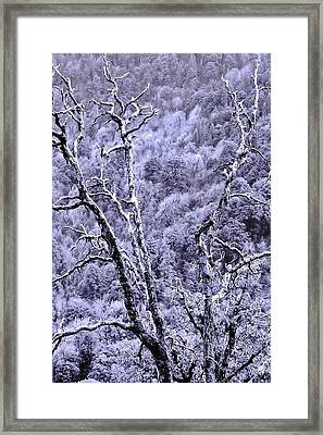 Tree Sprite Framed Print