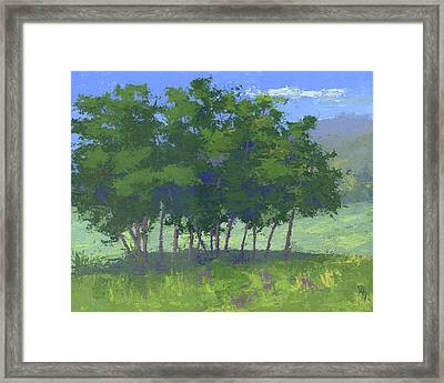 Tree Stand Framed Print by David King