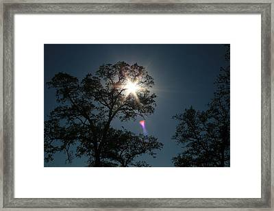 Tree Star Framed Print by Joshua Sunday
